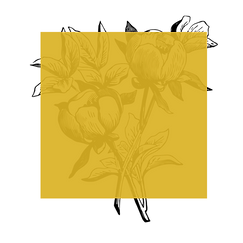 Frames with flowers_V2_08 kopie 4.png