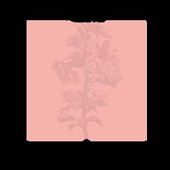 Frames with flowers_V2_08 kopie 5.png