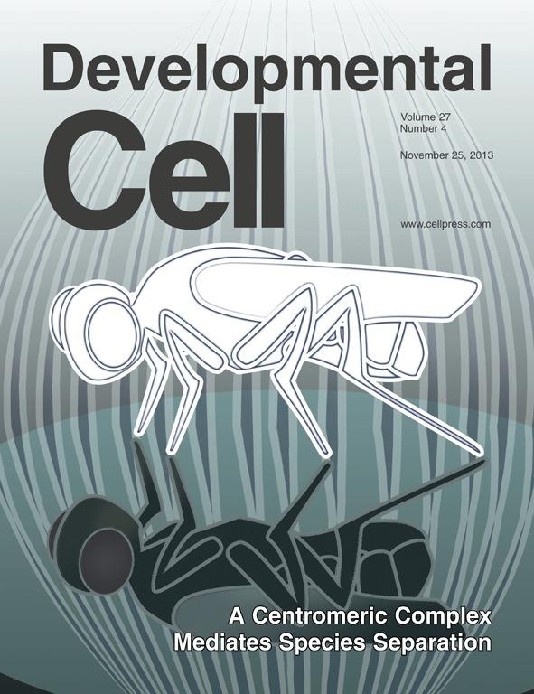 Ueno et al. Developmental Cell 2013