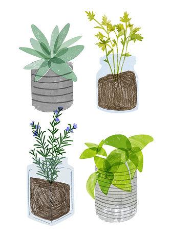 herbs (1).jpg