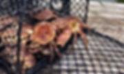 krabbeteinemedkrabber.jpg