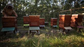 poem beehives