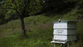 poem-beehive