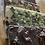 Thumbnail: Chocolate Bars