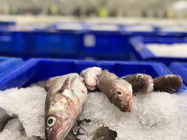 Peterhead Fish Market