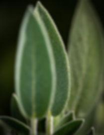 abstract-agave-aloe-3020635.jpg
