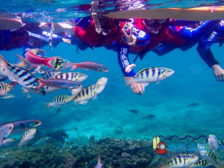 【海底漫步】浪漫與理念兼具的海底探險