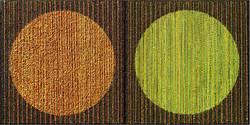 C P G THE ORANGE & GREEN CIRCLE (SOLD)