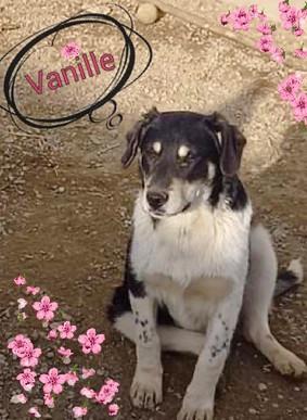 vanille-5.jpg