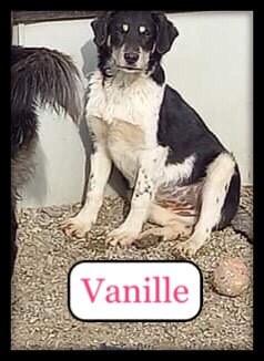 vanille-2.jpg