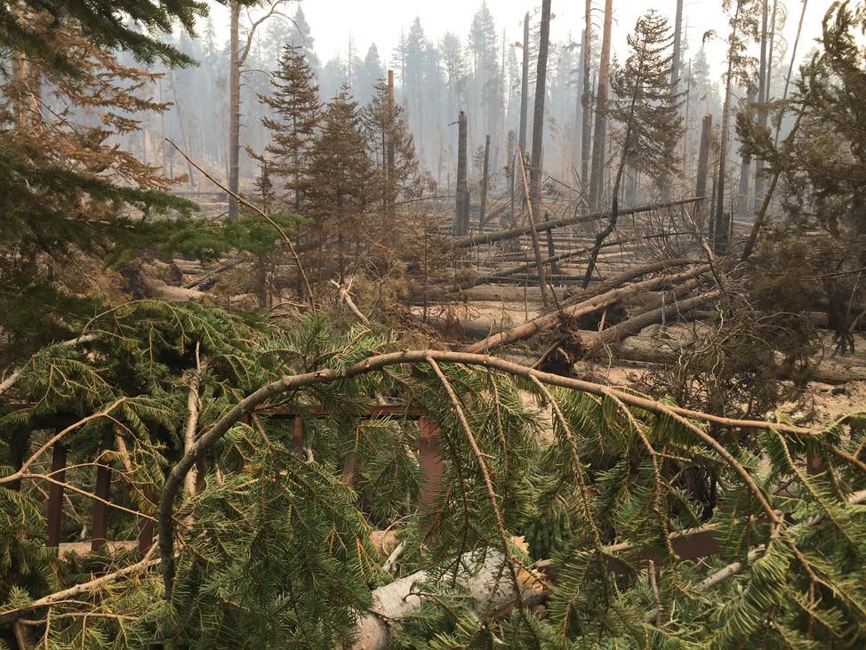"Massive Creek Fire In California Creates ""Fire Tornadoes"""