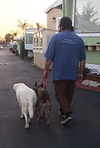 Mason walking Bela and Hank