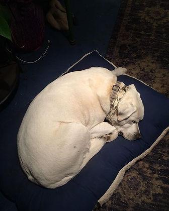 Bella Napping