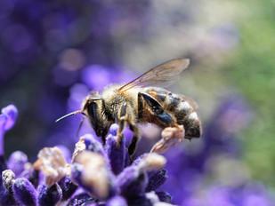 Un label pour une commune végétalisée, arborisée et engagée pour la biodiversité
