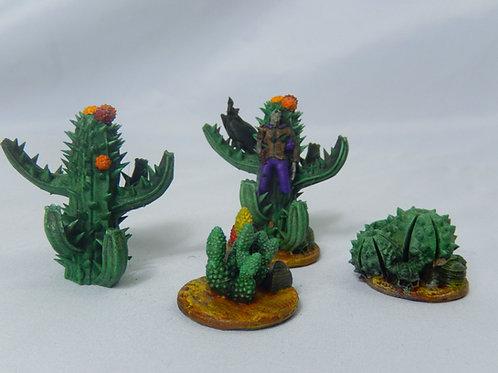Cactus Miniatures
