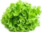 Salade feuilles de chêne verte BIO