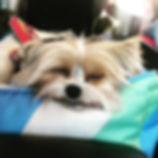 Road trippin' buddy ❤️#dogsofinstagram #