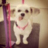 MoeMoe! #dogsofinstagram  #poshmobilepet