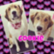 #muttsofinstagram #dogsofinstagram #utah