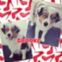#dogsofinstagram #utahsmallbusiness #uta