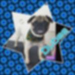 #pug #puglife #pugsofinstagram #dogsofin