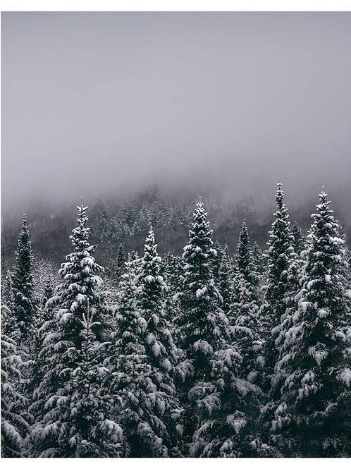 Tremblant Winterscape
