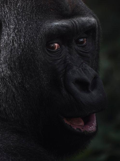 Détresse WWF