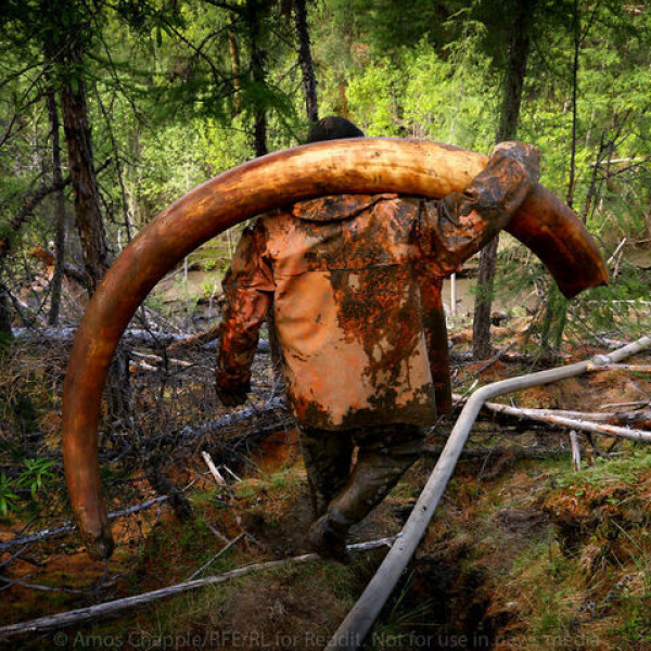 S7E8 | A Mammoth Problem