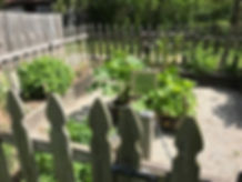 Medicinal Plants Garden.jpg