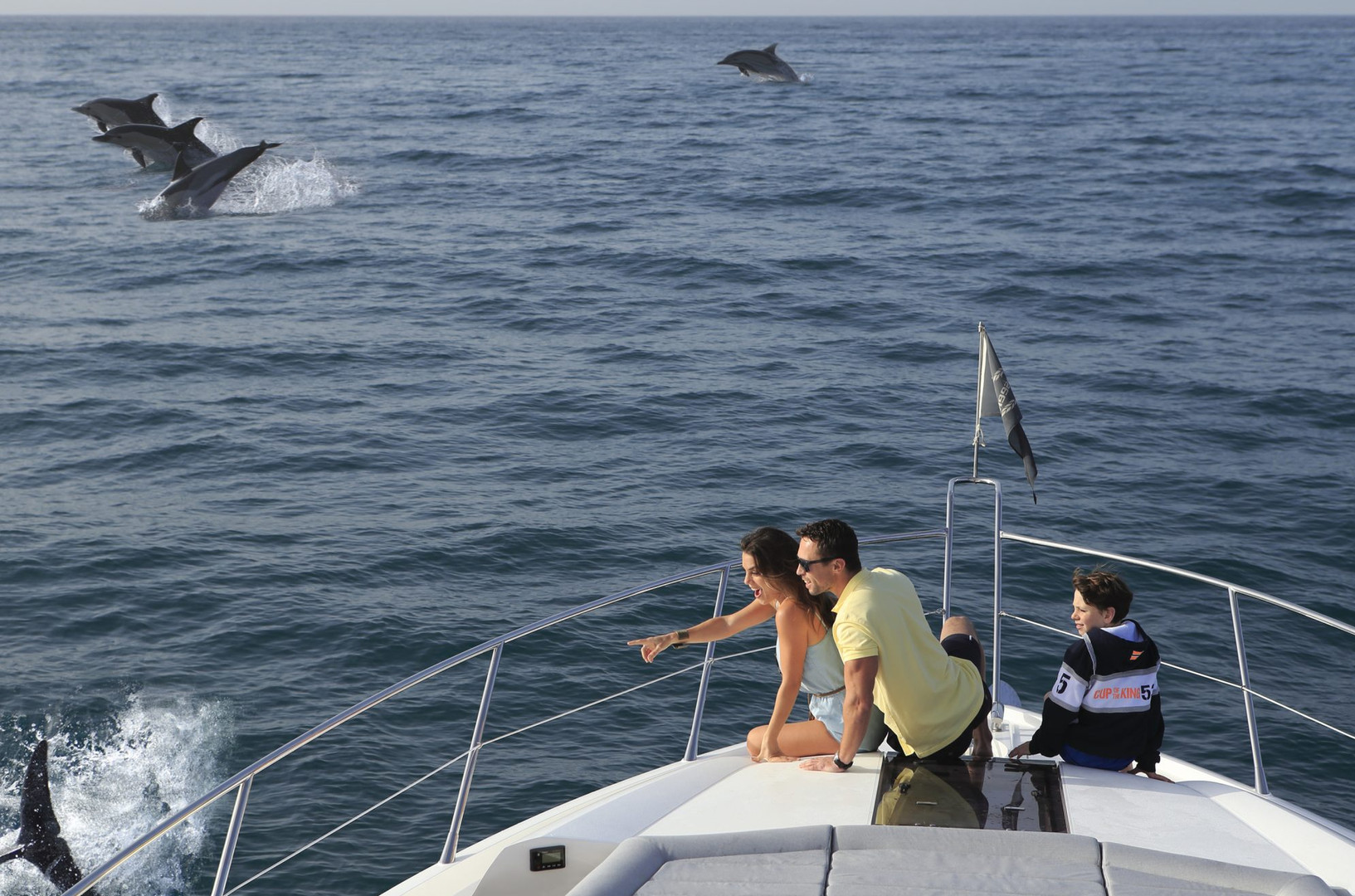 Whale and dolphin watching from the boat