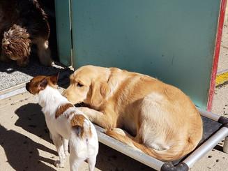 Dogs Outside.jpg