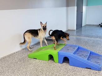 Dog Daycare.jpg