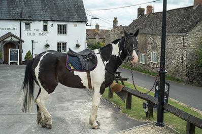 Horse outside a beautiful pub in Holton, Somerset