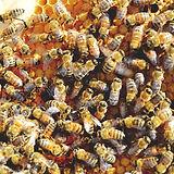 HoneybeesHQ.jpg