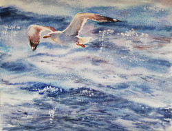 Volo sul mare