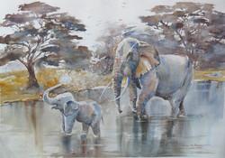 doccia africana