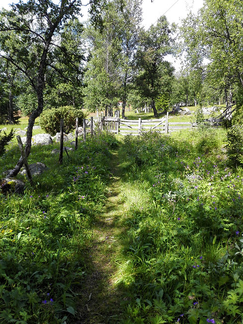 Gamleveien_Skurdalen_turtips.jpg