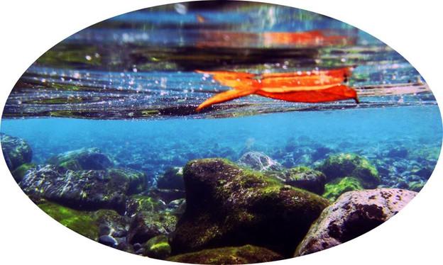 Floating (1)