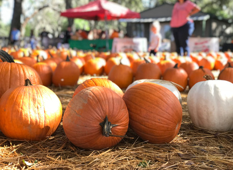 Central Florida Fall Activities for Families