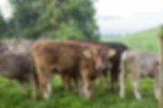 Uelihof_170717_web-4.jpg