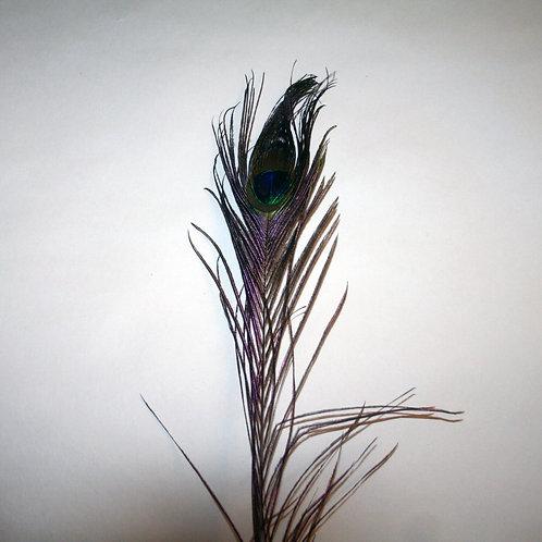 Balancing Peacock feather