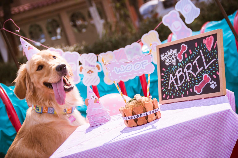 Fiestas Tortas Y Juguetes Para Perros En Colombia
