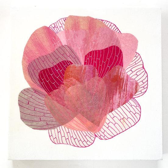 Petal Study Pink