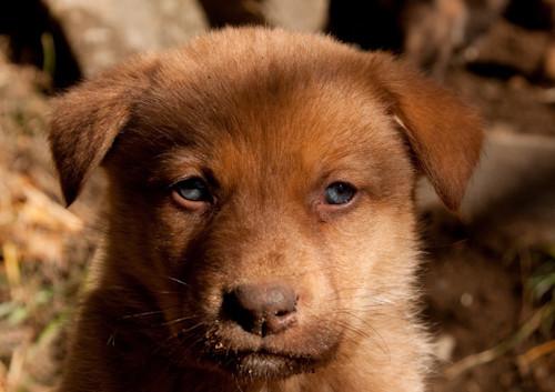 pup merry eyes-2.jpg