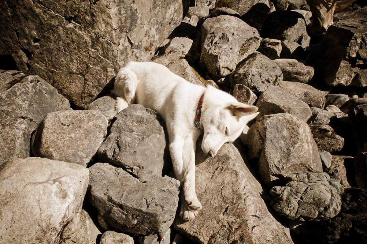 wc sleeping beauty.jpg