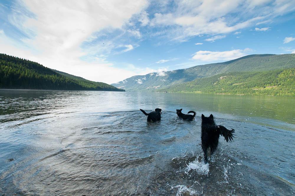 camp dogs wake-1.jpg