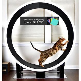 ferris-cat-exercise-wheel.jpg