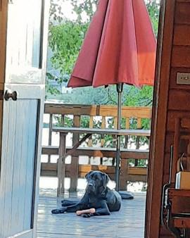 Veteran, basking on the deck.
