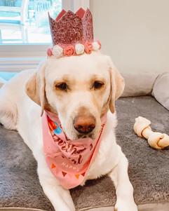 Breeder Dog Royalty 2nd Birthday