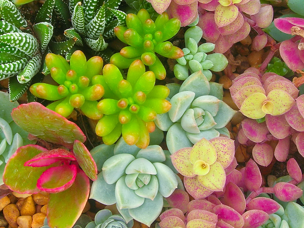 Miniature%20succulent%20plants_edited.pn